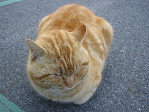 石舞台古墳の猫-04