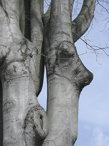 Reindeer trees