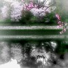 Another world (gleybird) Tags: sakura firstquality abigfave excellentphotographerawards alarecherchedutempperdu
