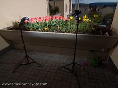 Flowers Setup