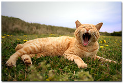 Shout! (B*_J) Tags: park sky field japan digital cat canon mouth spring sigma kanagawa dandilion shout miura jogashima