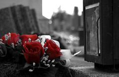 Rosas rojas del recuerdo (merxifuuu) Tags: vienna wien sculpture friedhof grave rose stone cutout dead austria österreich cementerio tomb rosa artificial plastic escultura tumba muerte viena tod zentralfriedhof cementery plástico piedra digitalphotoexposition