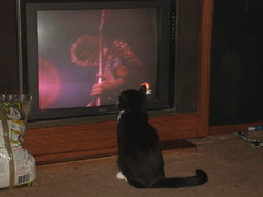 Bootsie watching Jimmy Page TSRTS dvd