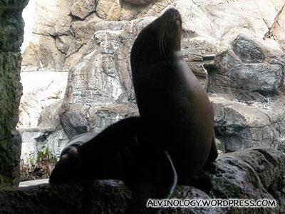 Sunbasking seal