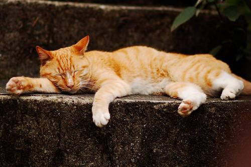 貓在階梯上昏倒了