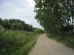 Parc Naturel du Méjean (hippiebrown24) Tags: horse france montpellier parc camargue balade lattes naturel méjean