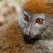 Madagascar_Andasibe_PKryl_8