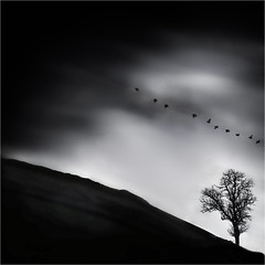 on Earth as in Heaven (fifich@t - off -:() Tags: light sky bw france tree up clouds heaven published darkness symbol opposite air fineart hill silhouettes exhibition nb ciel elements crow conceptual nuages raven arbre timeless symbolic colline lonelytree greyscale hss orne bassenormandie darkmood squarepicture classicbw mydarkside arbresolitaire minimallandscape crowsflying nikond300 nikkor1685vr silverefexpro minimalbw climbingtheslope blackisthecolour magicunicorntheverybest classicalbw magicunicornmasterpieces elitegalleryaoi fifichat1 ©frs niksoftwaresep2 montantlapente fificht ©frs