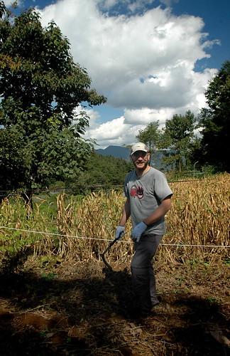 Harvesting Black Beans