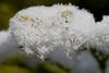 Winter! (Anieteke) Tags: winter snow cold ice sneeuw vlaardingen ijs koud diamondclassphotographer flickrdiamond