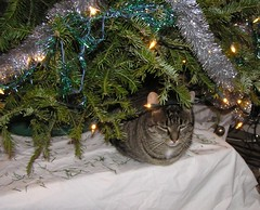 Mitzy and the tree