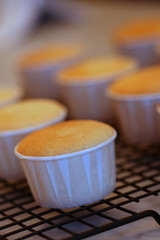 lemon cupcakes with bitters