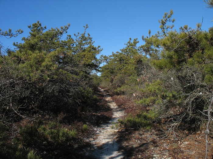 A Cool Hike To Think About In This Heat Wave Quogue Refuge