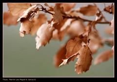 Marrn (.Kikaytete.QNK) Tags: flores detalle macro hojas hongos minimundo blueribbonwinner splendiferous 10faves anawesomeshot isawyoufirst kikaytete betterthangood