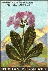 fleurs alpes 5