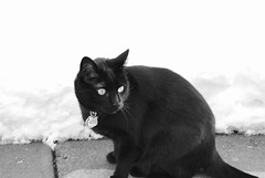 black and white (PhotoLab507) Tags: winter snow black cat patio jett superbmasterpiece superbmasterpieces heartawards