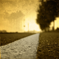 () Tags: road sun tree andy yellow europe andrea andrew benedetti
