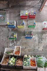 Birds and vegetables (CharlesFred) Tags: peace middleeast syria damascus hospitality damas siria honour  levant syrien syrie suriye  syrianarabrepublic  middenoost   shoufsyria    welovesyria aljumhriyyahalarabiyyahassriyyah siri