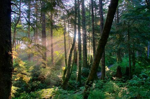 Bosque de Forks - Área dos Vampiros 2503810021_487665c3ca