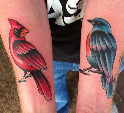 Cardinal_Bluejay