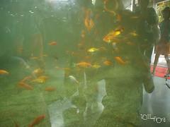 20110602酷節能體驗營 (54) (fifi_chiang) Tags: zoo taiwan olympus taipei ep1 木柵動物園 17mm 環保局 酷節能體驗營