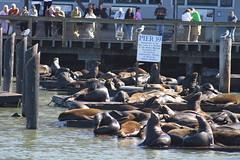 San Francisco - Pier 39