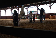 The Leaping Llama competition