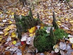 Moss Castle