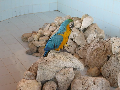 Bored bird