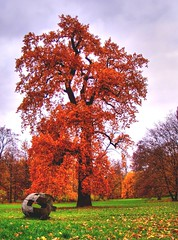 Autumn Colors (Batram) Tags: autumn tree fall nature colors leaf gotha schlosspark batram infinestyle diamondclassphotographer flickrdiamond thegoldenmermaid thegardenofzen