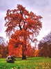 Autumn Colors (Batram) Tags: autumn tree fall nature colors leaf gotha schlosspark batram infinestyle diamondclassphotographer flickrdiamond thegoldenmermaid thegardenofzen