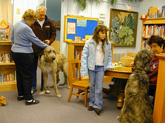 Irish Wolfhounds @ library