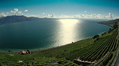 Lavaux (Fispace) Tags: blue sun lake mountains green switzerland suisse geneva fisheye vineyards leman vaud lavaux 10mm genevalunch landsca