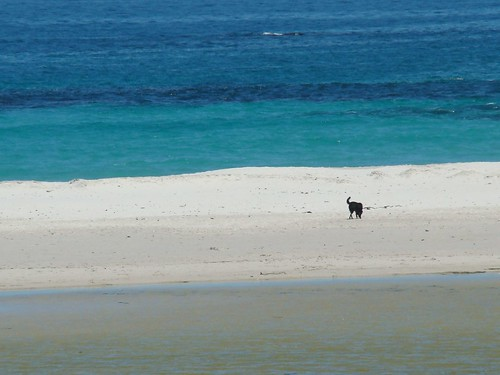 A lone dog on the beach...