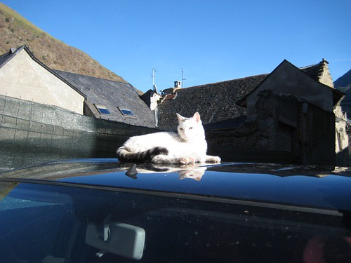 Cat on a hot aluminum roof
