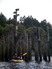 IMGP1068 (spuzzum42) Tags: kayak victoria kayaking brentwoodbay todinlet