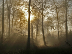 Foggy Wood (algo) Tags: trees light england sun sunshine misty fog photography topf50 topv555 topv333 bravo topv1111 chilterns topv999 algo topf100 100f magicdonkey 50f 200750plusfaves infinestyle searchthebestnew