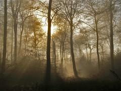 Foggy Wood (algo) Tags: trees light england sun sunshine misty fog photography topf50 topv555 topv333 bravo topv1111 chilterns topv999 algo topf100 100f magicdonkey 50f 200750plusfaves infinestyle searchthebestnew