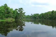 Bayou -- Louisiana's Wetland