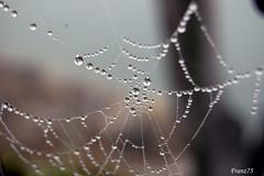Water Drops (franz75) Tags: italy water d50 drops nikon italia spiderweb drop acqua ivrea goccia gocce ragnatela canavese abigfave wowiekazowie betterthangood
