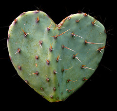 A Texas Valentine for my Flicker Friends (AnEyeForTexas) Tags: cactus texas valentine westtexas opuntia pricklypear botanicals pdpnw pdpnwg hugyourcacti