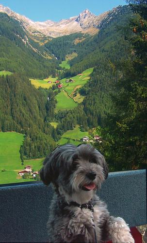 viaggiare col cane in Alto Adige