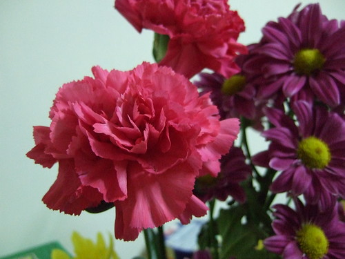 Carnation@Home