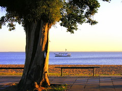 Ipanema (Porto Alegre-RS-Brasil) (Claudio Marcon) Tags: tree praia brasil landscape boat barco portoalegre árvore fotoclube ascoresdosul theperfectphotographer claudiomarcon claudiolmarconribeiro