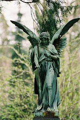Angel 013