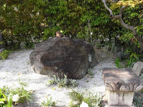 元興寺(かえる石)-20