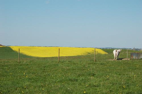 青緑黄、そして白。