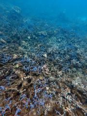 Mantanani Island Sabah Borneo (Eddie Yip) Tags: malaysia sabah mantanani borneo mantananiisland 馬來西亞 沙巴 美人魚島 gopro coral snorkeling