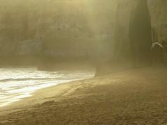 FLY AWAY (André Pipa) Tags: caneiros praiadoscaneiros lagoa portimão algarve beach playa plage light luz desert deserta gaivota seagull gold ouro qfooooooog bêjos explore 100faves andrépipa photobyandrépipa