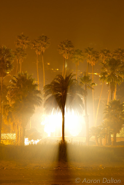 Light Bursting Behind Palm Tree